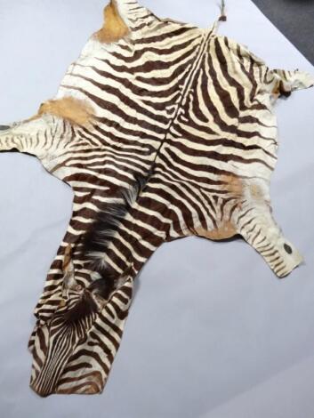 An early 20thC zebra skin