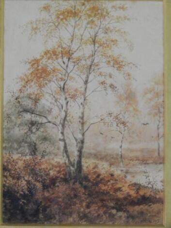 Watercolour of silver birches in landscape