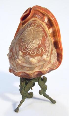 A cameo shell lamp
