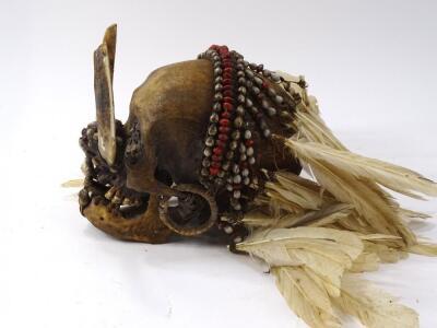 An Asmat tribal skull - 4