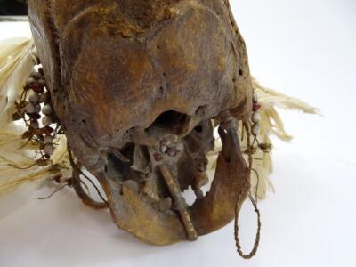 An Asmat tribal skull - 6