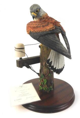 A Border Fine Arts model of a kestrel