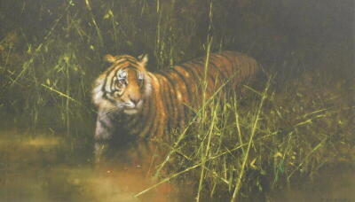 David Shepherd (1931-2017). Into the Sunlight there came a Tiger, artist signed limited edition coloured print, 80/950, 50cm x 78.5cm, and another Cheetah 76/950.