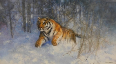 After David Shepherd. Tiger in the Snow, limited edition number 62950, signed in pencil to the border and dated 05, with certificate of authenticity, 37cm x 67cm, framed and glazed.