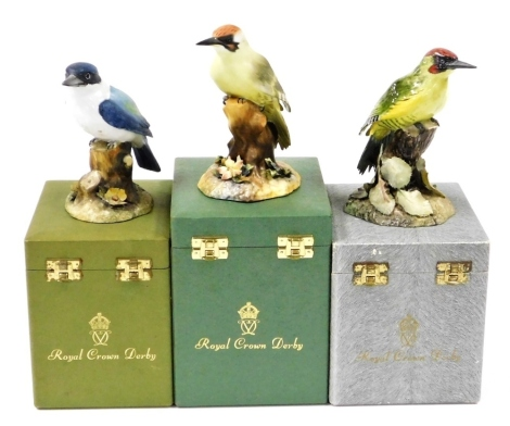 Three Royal Crown Derby boxed bird ornaments, to include green woodpecker, 15cm high, in matte finish, a glazed woodpecker, 15cm high, and a matte finish kingfisher, 13cm high. (3)