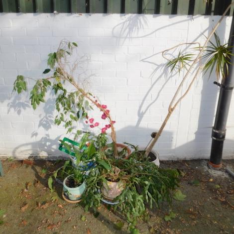 Four house plants in various pots, etc. (a quantity)