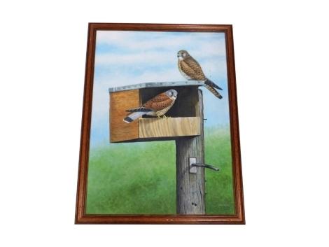 Chris Orgill (20thC). Kestrels in a nesting box, acrylic on board, signed, 63cm x 46cm.