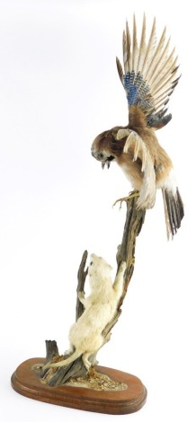 A taxidermy group of a jay and stoat, arranged on a wooden branch, on a treen base, 74cm high.